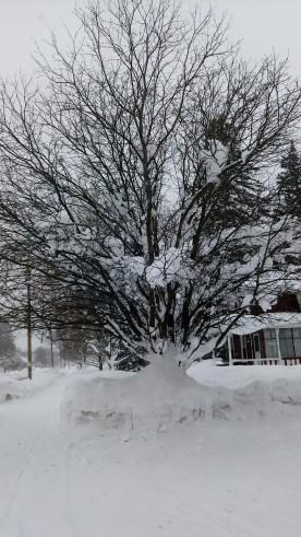 yep, snow is getting deep!
